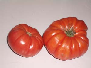 Ugly Ripe Tomatoes